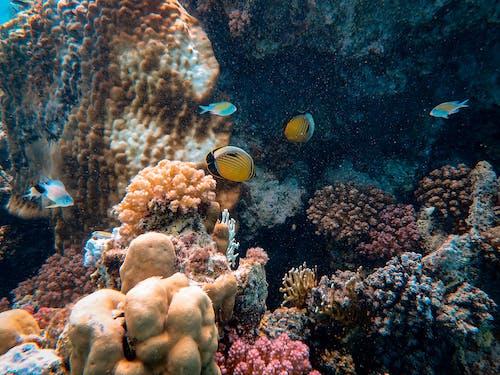 Kostnadsfri bild av djup, doppa, fiskar, korall