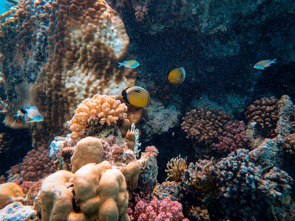 การถ่ายภาพสัตว์ป่า, จมอยู่ใต้น้ำ, ชีวิตทางทะเล