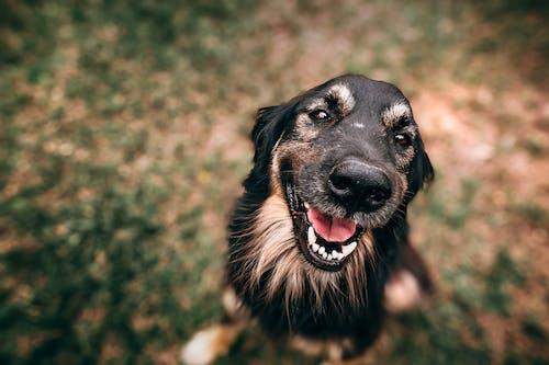 Foto stok gratis anjing, berbayang, berdarah murni, berfokus
