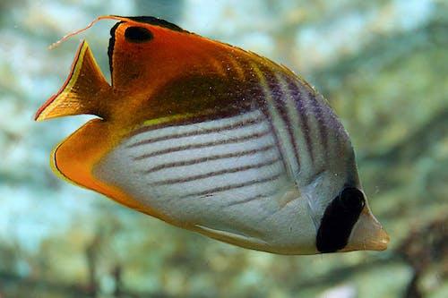 Δωρεάν στοκ φωτογραφιών με ζωολογικός κήπος, θαλάσσια ζωή, πολύχρωμος, ψάρι