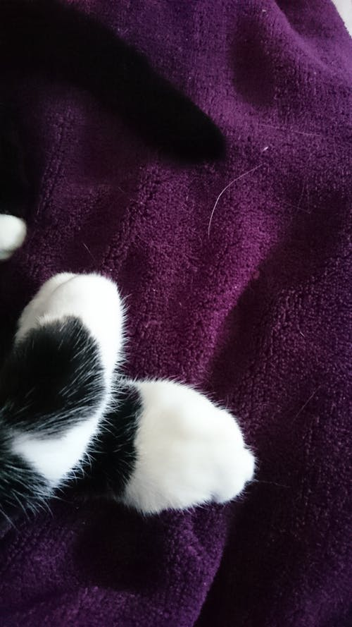 Free stock photo of blanket, cat, paws