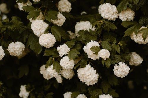 Ingyenes stockfotó 4k-háttérkép, botanikus, finom, friss témában