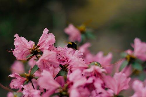Immagine gratuita di ambiente, ape, bellezza, bellissimo