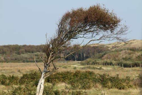 Δωρεάν στοκ φωτογραφιών με άνεμος, δέντρο, θυελλώδης, καταιγίδα