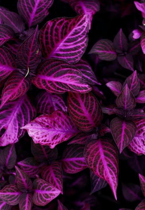 Free stock photo of beautiful, flower, plant, purple