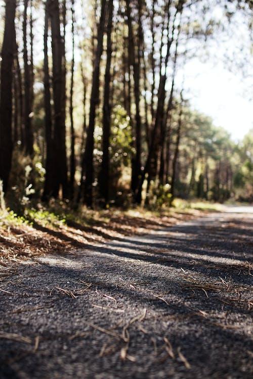คลังภาพถ่ายฟรี ของ ต้นไม้, ป่า, เงา