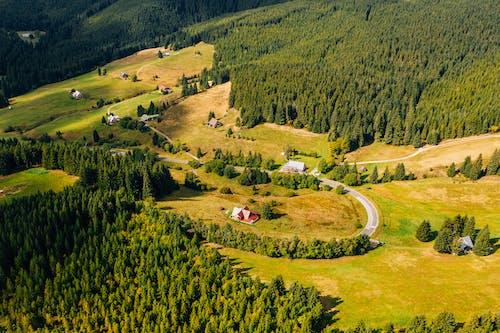 Бесплатное стоковое фото с Аэрофотосъемка, вечнозеленый, деревья, дорога
