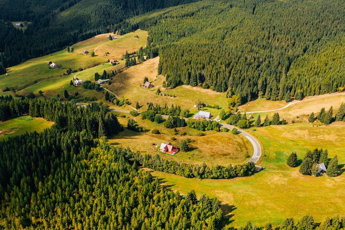 açık hava, ağaçlar, arazi