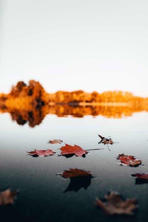 10月, シーズン, 反射, 夜明けの無料の写真素材