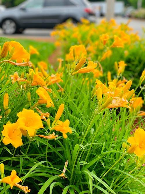 Foto profissional grátis de flor, flor amarela, flores bonitas