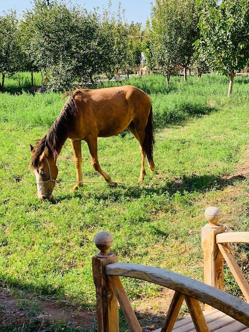 Foto profissional grátis de cavalo, jardim, verão