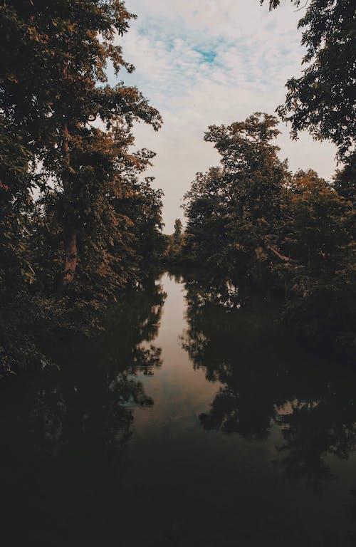 ağaçlar, doğa, ırmak içeren Ücretsiz stok fotoğraf