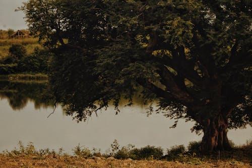 ağaç, göl, göl kenarı, manzara içeren Ücretsiz stok fotoğraf