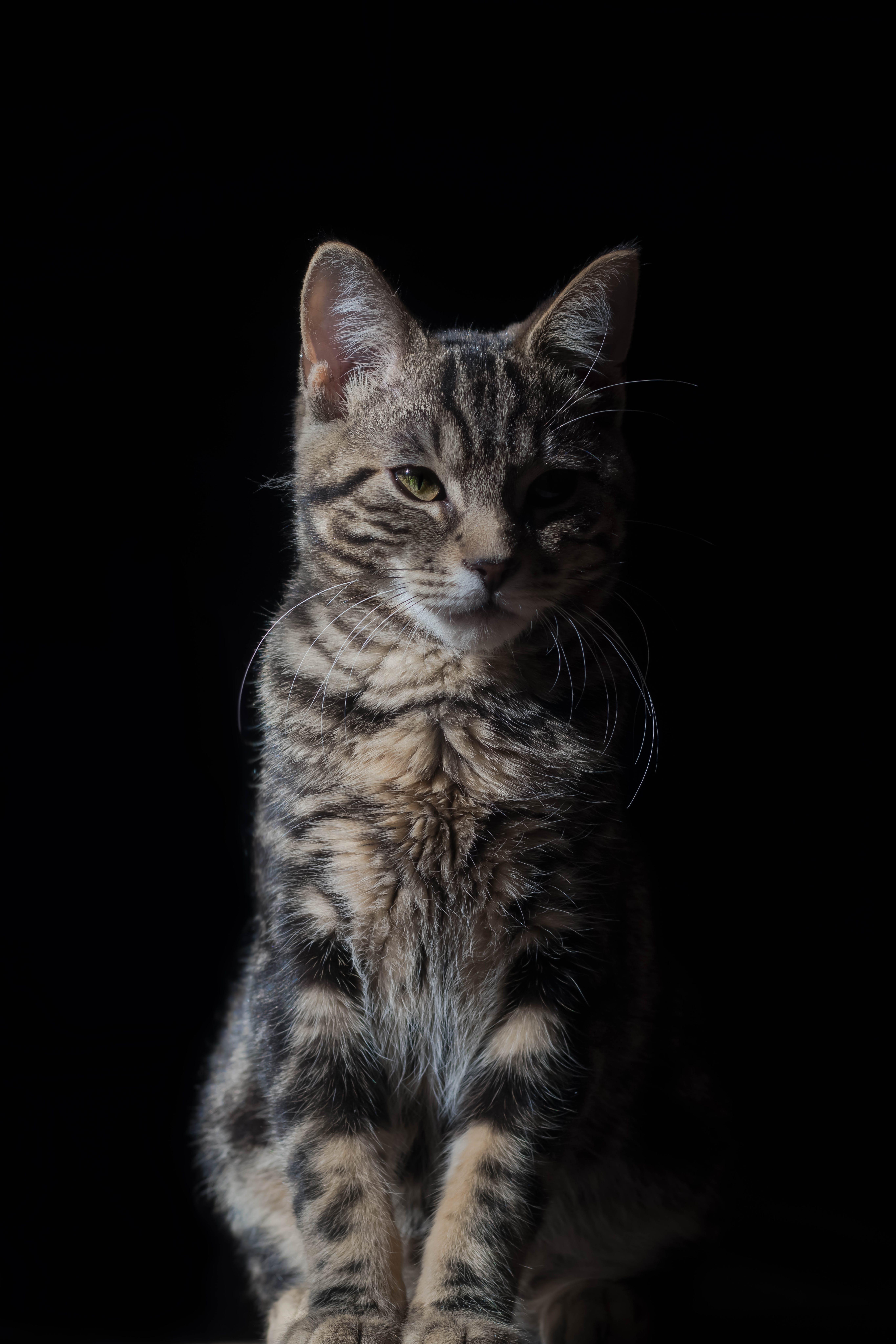 Cat Against Black Background
