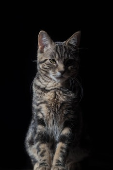 Cat Against Black Background