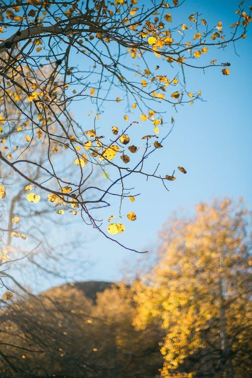 Fotobanka sbezplatnými fotkami na tému jeseň, list, listy, osika