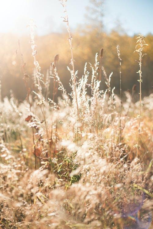 Foto stok gratis bidang, kilang, rumput