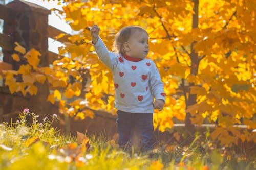Kostnadsfri bild av baby mage, ballong, ballongflygning, bea