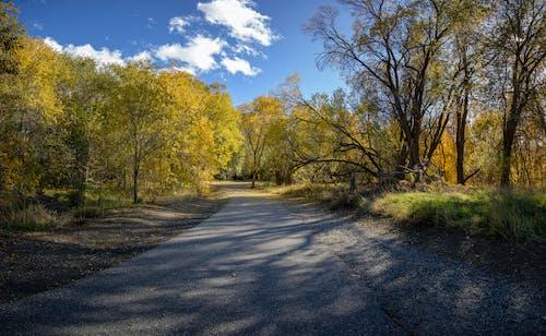 Imagine de stoc gratuită din culori de toamnă, octombrie, potecă