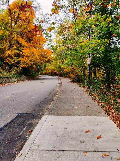 Ilmainen kuvapankkikuva tunnisteilla pudonneet lehdet, putoaminen, Syksy, syksyn lehdet
