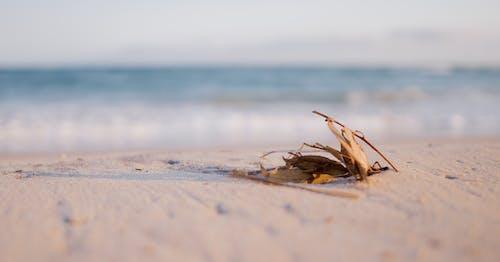 나뭇잎, 모래, 부드러운, 블루의 무료 스톡 사진