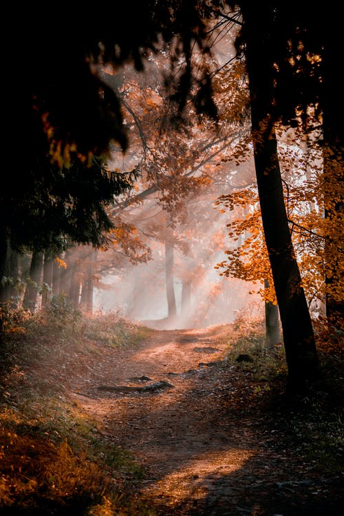 Kostenloses Stock Foto zu bäume, dunstig, düster, farben des herbstes