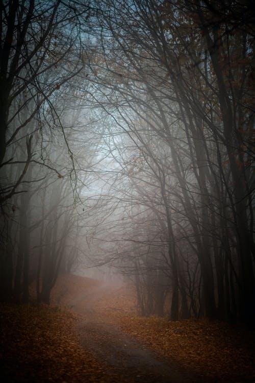 Photos gratuites de arbres, branches d'arbre, brouillard, brumeux