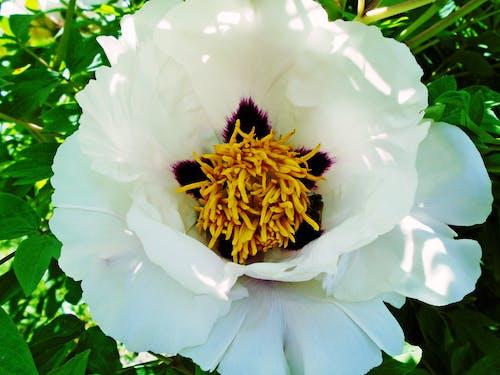 bahar, beyaz, böcek, çiçek içeren Ücretsiz stok fotoğraf