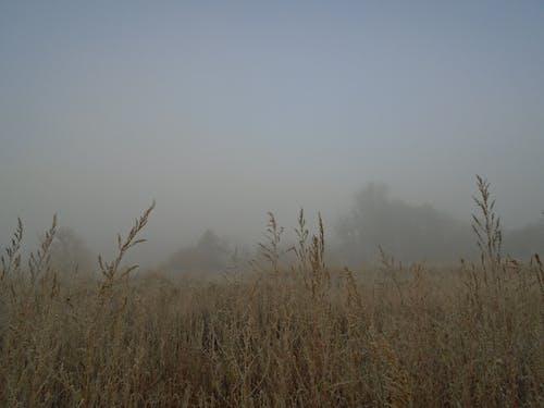 ağaç, alan, arazi, beyaz içeren Ücretsiz stok fotoğraf