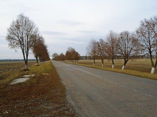 ağaçlar, alan, araba, arazi içeren Ücretsiz stok fotoğraf