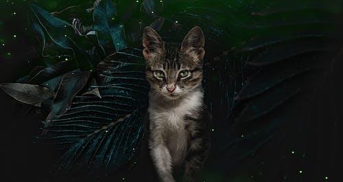 Ingyenes stockfotó állatbarát, állatfotók, állatok, macska témában
