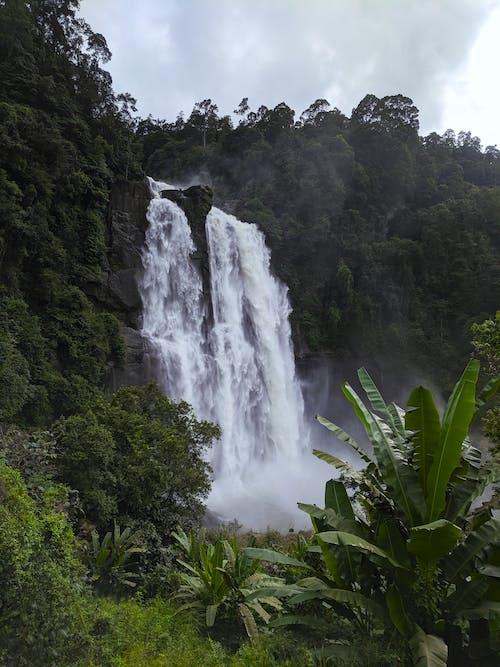 Ilmainen kuvapankkikuva tunnisteilla banaaninlehdet, banaanipuut, kauneus luonnossa, lehdet