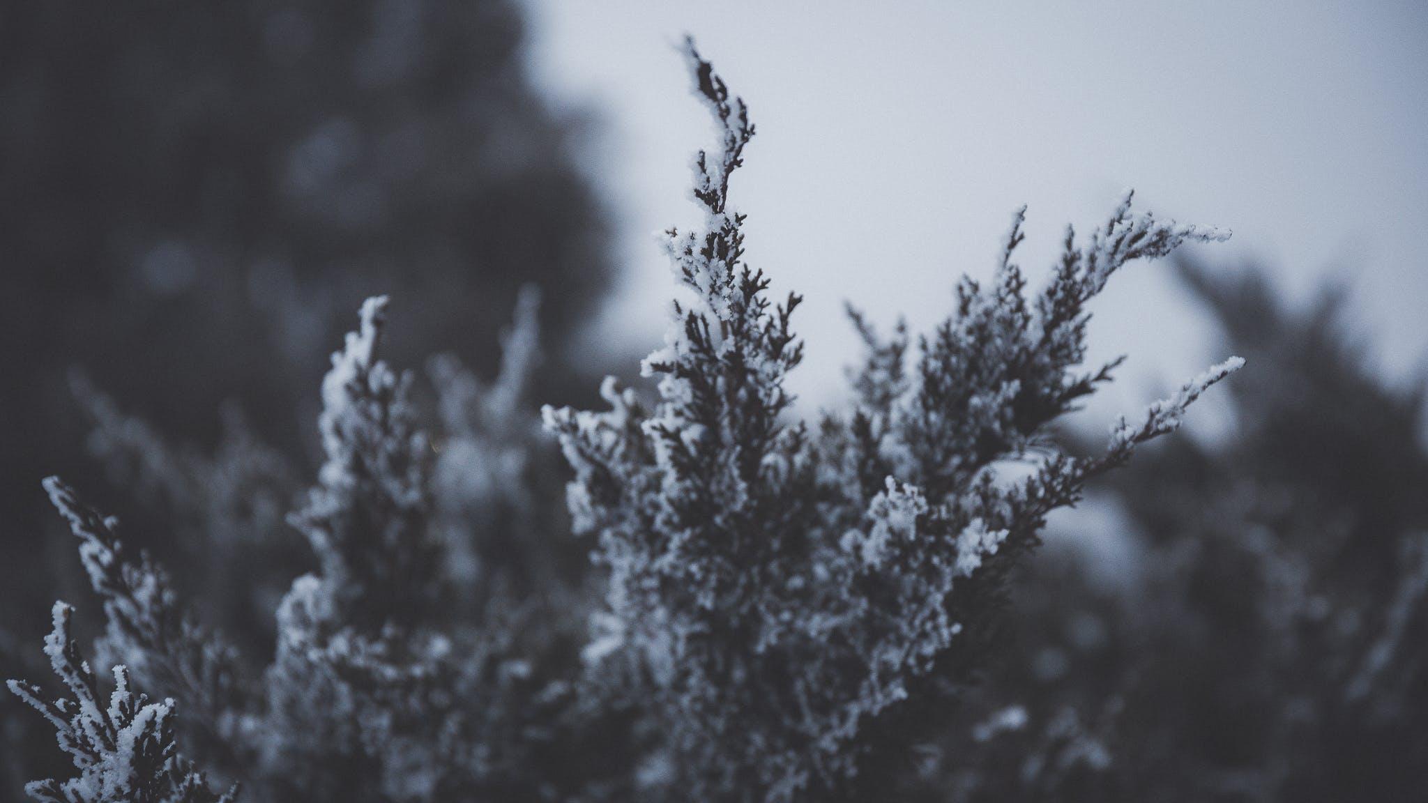 Kostenloses Stock Foto zu ast, himmel, natur, schnee