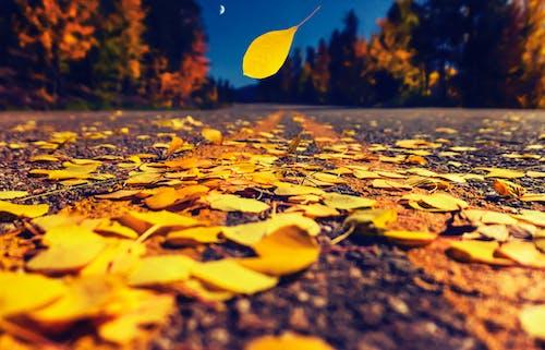 Free stock photo of asphalt, autumn, autumn leaves, dusk