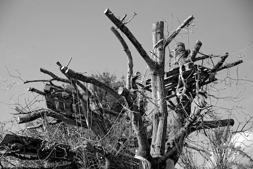 Darmowe zdjęcie z galerii z arbre, bois, ciel, élaguage
