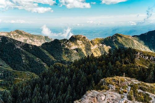 Immagine gratuita di alberi, alto, ambiente, aria