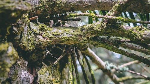 Бесплатное стоковое фото с марко, природа