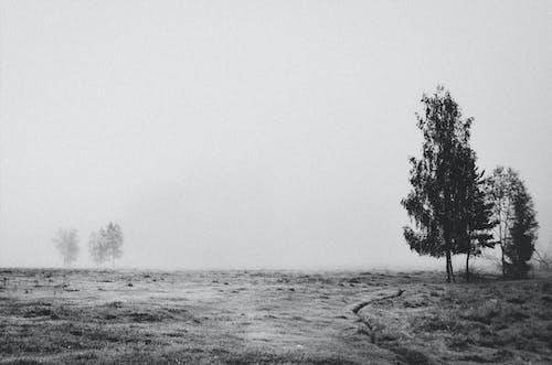 Photos gratuites de arbres, brouillard, brumeux, ciel