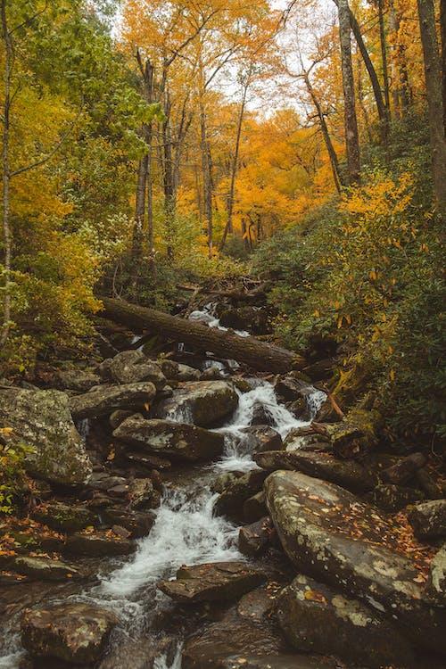 валуны, вода, деревья