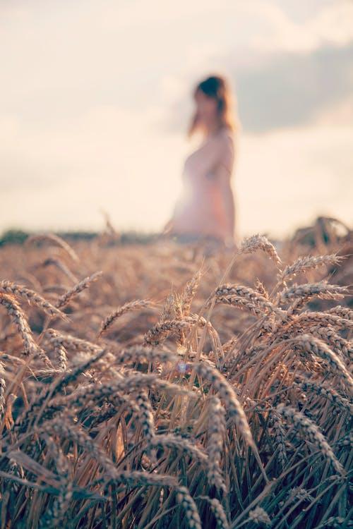 Základová fotografie zdarma na téma cereální, farma, holka, hřiště