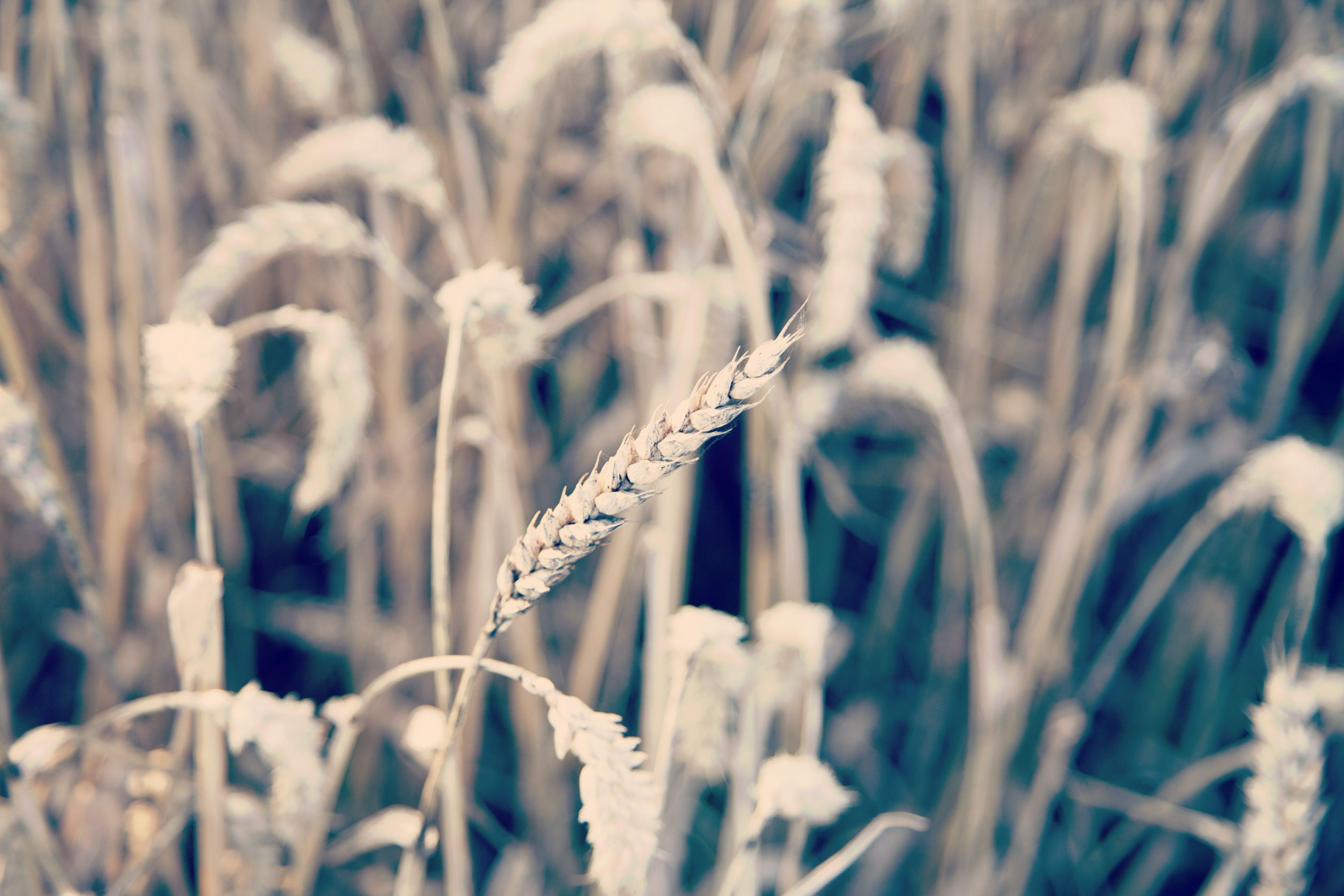 계절, 농장, 들판, 밀밭의 무료 스톡 사진