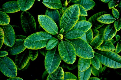 Free stock photo of green, plant