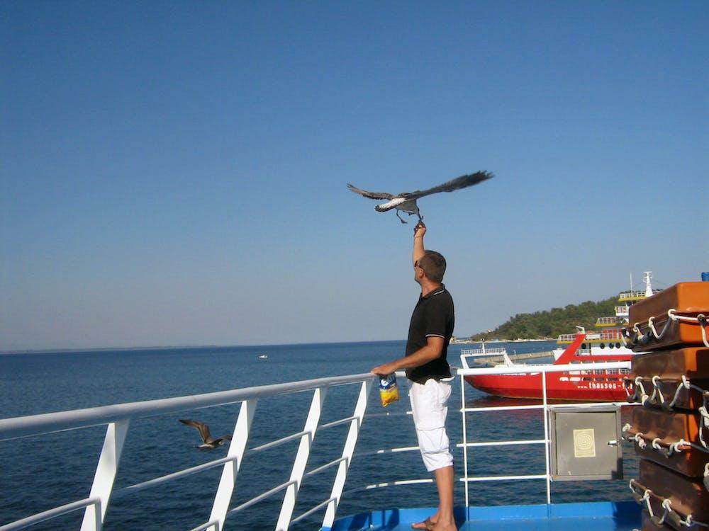 Free stock photo of boat, seagull, seagulls