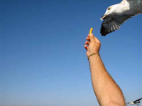 Free stock photo of greece, seagull
