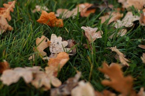 Imagine de stoc gratuită din cădere, culori de toamnă, iarbă, starea de spirit de toamnă