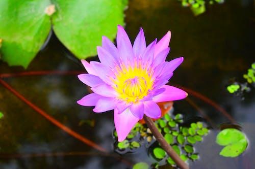 Ilmainen kuvapankkikuva tunnisteilla kasvi, kasvikunta, kauneus luonnossa, kauniit kukat