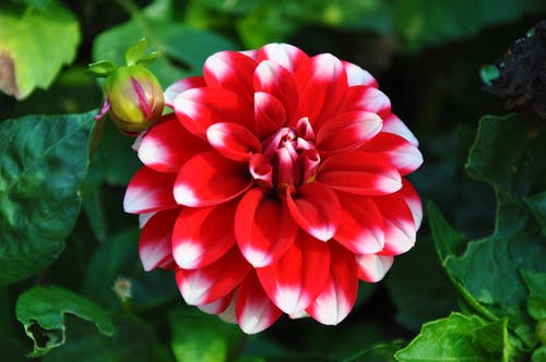 Free stock photo of green, red flower