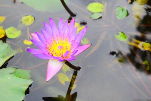 Ilmainen kuvapankkikuva tunnisteilla kasvi, kasvikunta, kauneus luonnossa, kaunis kukka