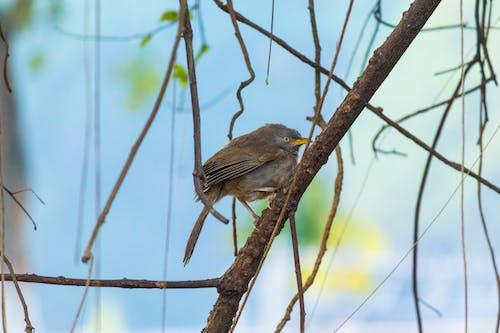 Fotobanka sbezplatnými fotkami na tému 700d, Canon, domáce vtáky, džungľa