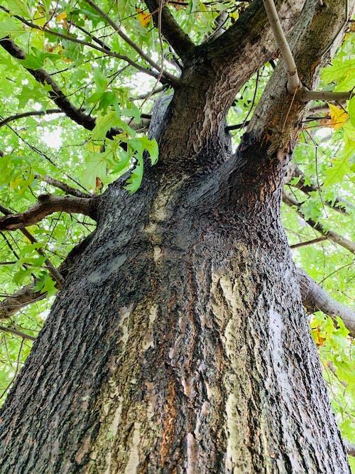 下落, 树木森林 的 免费素材照片